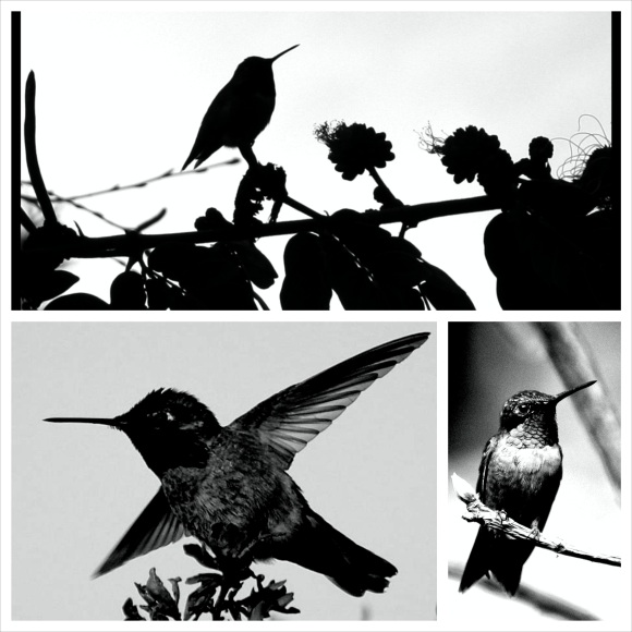 humming_Fotor_Collage