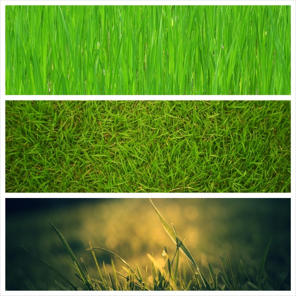 grass1_collage